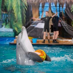 Дельфинарии, океанариумы Горшечного
