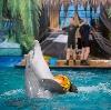 Дельфинарии, океанариумы в Горшечном