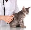 Ветеринарные клиники в Горшечном